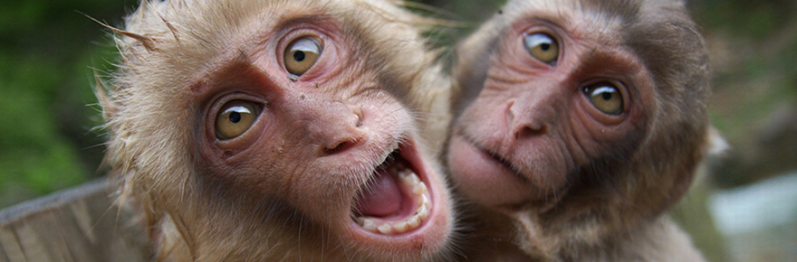 animals-monkeys-HD-Wallpapers
