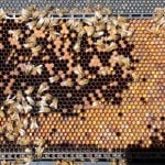 WRUP: Marvelous true facts about something other than bees edition