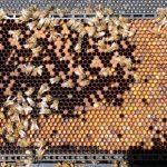 Bee Soda: AHHHH BEES
