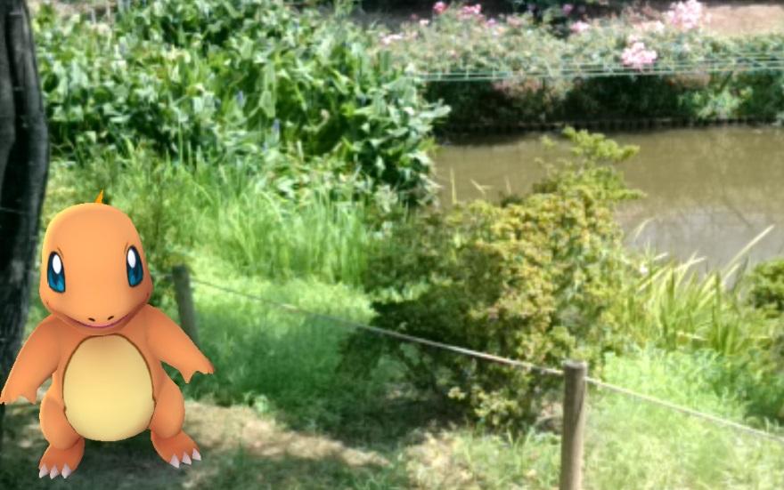 pokemongo_charmander_garden