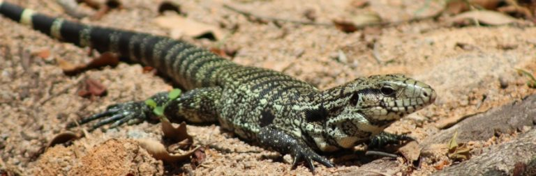WRUP: One hundred names you could give a pet lizard edition