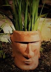 mr. planthead.jpg