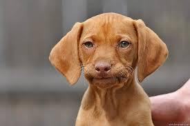 Annoyed Doggy.jpg