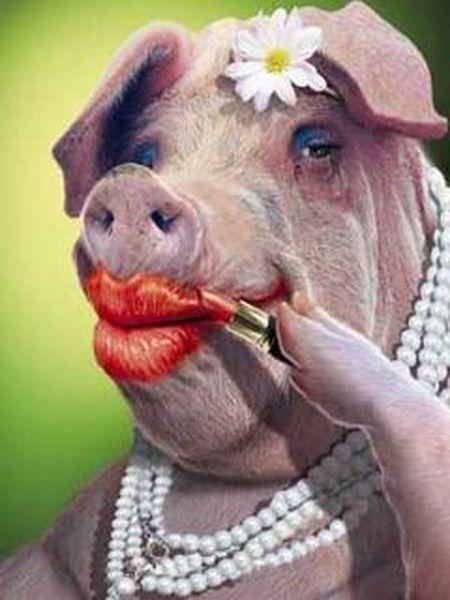lipstick-on-a-pig.jpg