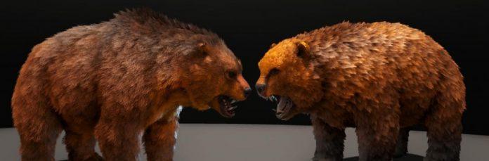 Bears &c