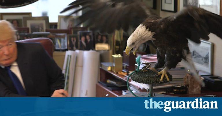 when-eagles-attack.jpg
