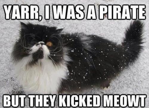 cat-pirate.jpg