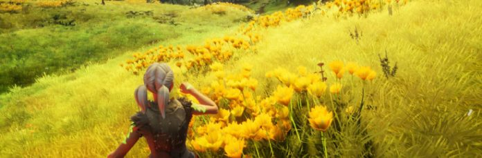 among the fields of gold