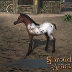 Sota_Stretchgoal_Appaloosa_Foal_A