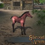 Sota_Stretchgoal_Roan_Foal_A